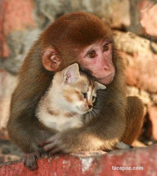 maimuta_pisica