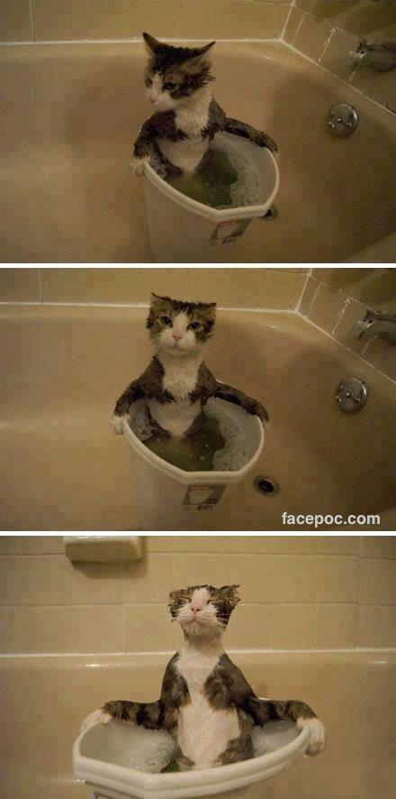 pisica_baie